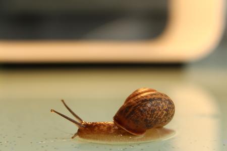 The garden snail crawls on the table Stock fotó