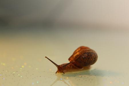 The Garden snail Stock fotó