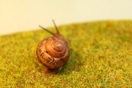 The Garden snail on the grass Stock fotó