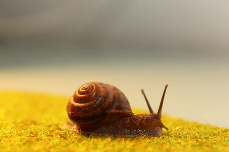 A snail on the grass