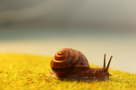 The snail crawls on the grass