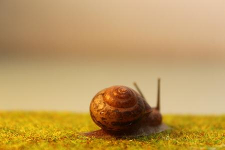 The garden snail crawls along the grass