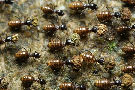The Marching Ants