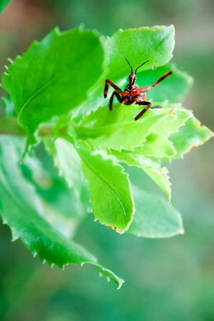 A red and black bug on a leaf appears to wave at the viewer.