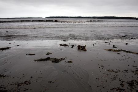 A sandy shoreline on a gold, grey day near Bar Harbor, Maine.
