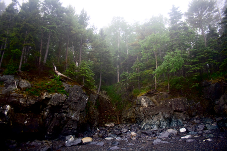 Craggy rocky shoreline of Maine with trees and fog.