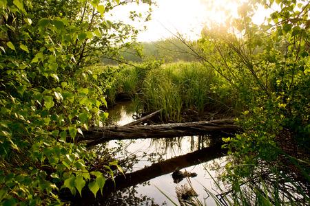 Morning sunlight illuminates a stream and meadow in Acadia National Park near Bar Harbor, Maine.