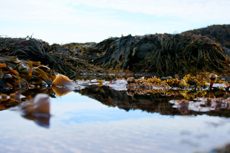Tidal pools in Acadia National Park near Bar Harbor, Maine.