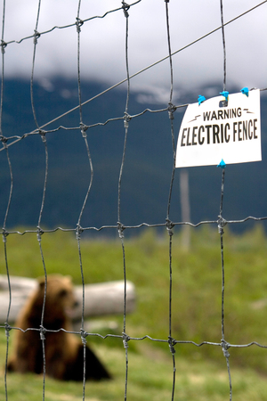 A bear is caged in with an electric fence in Alaska. Standard-Bild