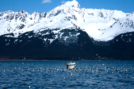 A flock of gulls surrounds a buoy with snow-covered mountains in the background near Seward, Alaska.