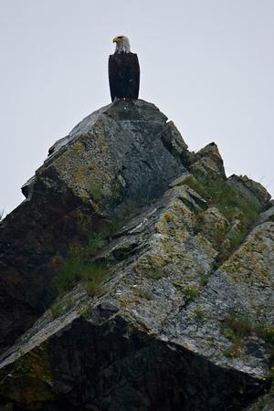 A bald eagle perches on a rock near Seward, Alaska