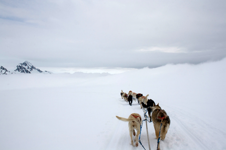 View from the sled being pulled by dogs across the snow in Alaska.