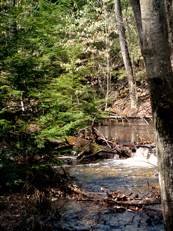 A river running through Bear Brook State Park near Allenstown, New Hampshire.