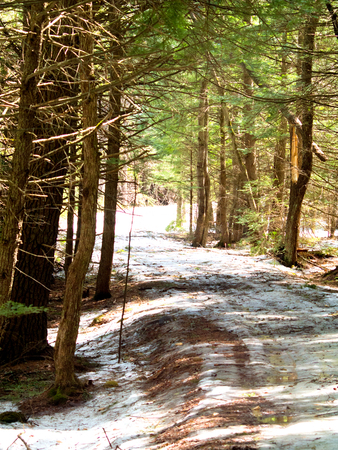 A path through the woods in springtime with some snow remaining on the ground. 写真素材
