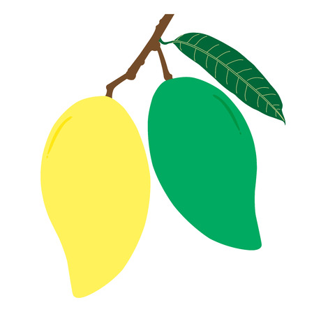 Raw and ripe mango and leaf with branch. Summer fruit for health and lifestyle. Illustration vector icon.