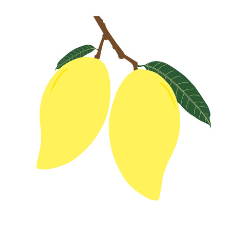 Two ripe mango and leaf with branch. Summer fruit for health and lifestyle. Illustration vector icon.