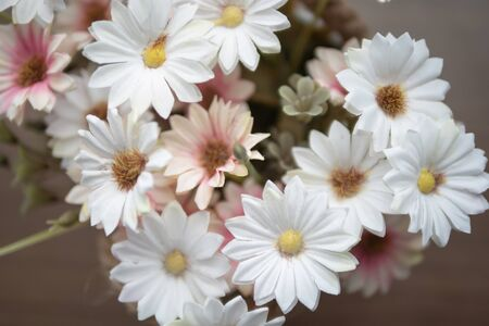 Close up white and pink flowers on the wooden table with yellow pollen. Top view blooming of fake flower.