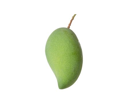 Mango fruit isolated with clipping paths. It can be eaten both raw and ripe. Raw mango, green crust and mostly white flesh, sour Except some varieties called mango oily.