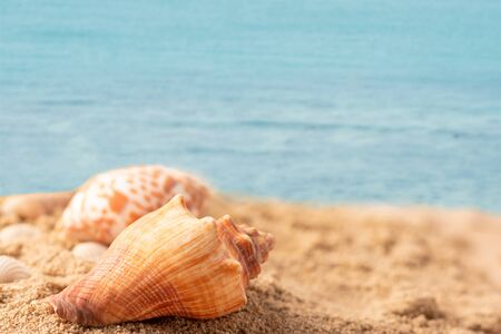 Close up shell on the beach with the blue sea. Select focus shallow depth of field and blurred background with copy space.