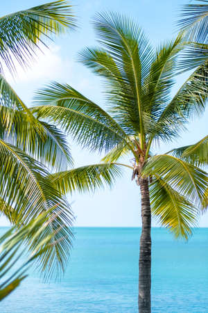 Palm trees branches and blue sky, turquoise sea water in a sunny summer day. Tropical vacation. High quality photo