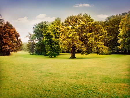 Autumn trees with beautiful pastel colors. Nature landscape background with green meadow and trees in fall Stock Photo - 10682548