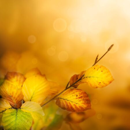 Colorful Autumn leaves background with bokeh lights Stock Photo - 10682416