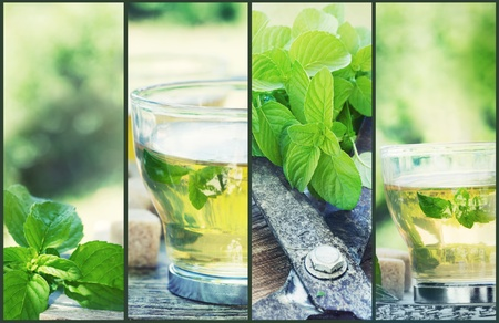 Mint tea collage. Freshly cut mint from the herb garden with mint tea and cubes of sugar Stock Photo - 10682531