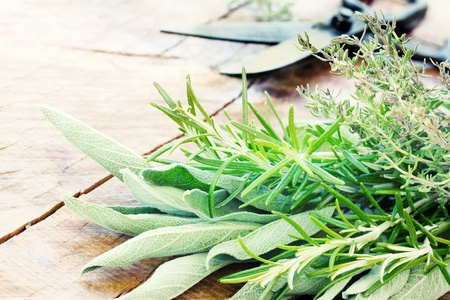sage: Freshly harvested herbs with old antique scissors on wood background. Fresh sage, thyme, mint and rosemary leaves
