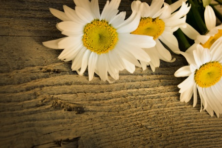 Daisy flower over old rustic wooden background photo