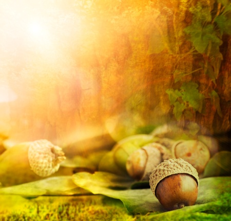 tree in autumn: Autumn border design with oak acorns and bokeh lights. Stock Photo