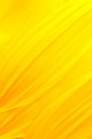yellow: Extreme macro shot. Abstract background with sunflower petals Stock Photo