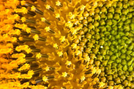 extreme macro: Extreme macro shot. Abstract background with sunflower petals Stock Photo