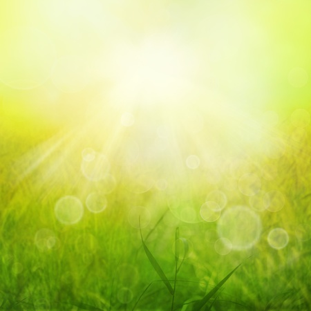 flowers bokeh: Spring or summer heat abstract nature background Stock Photo