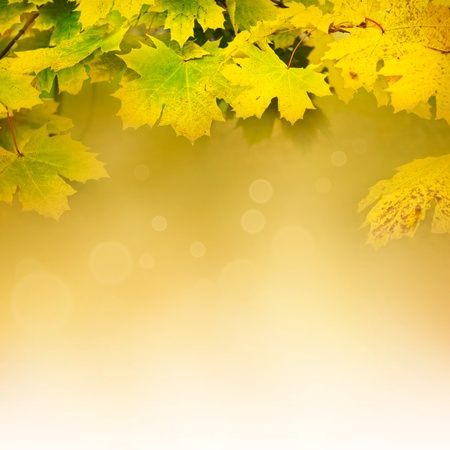 background environment: Autumn design background with colorful green and yellow leaves falling from the tree Stock Photo
