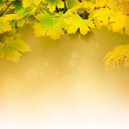 Hösten design bakgrund med färgglada gröna och gula löv som faller från trädet