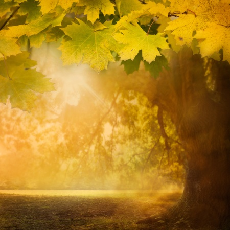 Autumn design background with colorful green and yellow leaves falling from the tree Stock Photo - 10682676