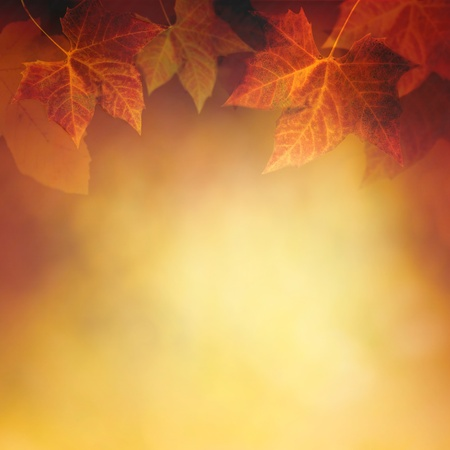 Design fond color� d'automne avec feuilles rouges et jaunes tombant de l'arbre Banque d'images