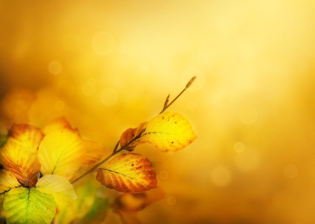 winter leaf: Colorful Autumn leaves background with bokeh lights