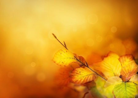 Colorful Autumn leaves background with bokeh lights Stock Photo - 10842912