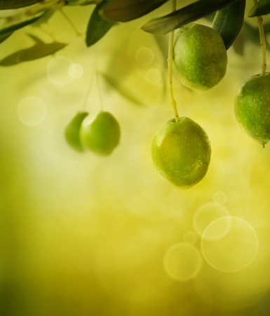 olive trees: Summer olives design background with fresh olive branch and bokeh lights