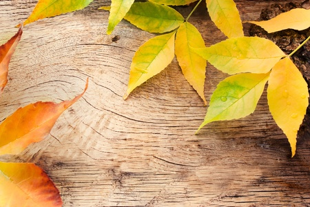 Autumn forest background. Acorns on tree bark and autumn colorful leaves. with copyspace photo