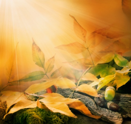sun down: Forest background. Autumn border design with oak acorns and sunlight