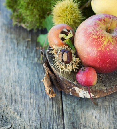 Autumn series. Nature background made of autumn fruit in the forest and beautiful sunlight in the back. Chestnut, vine leaf, wild apple, quince and apples. Stock Photo - 10906939