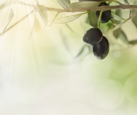 Summer olives design background with fresh olive branch and bokeh lights