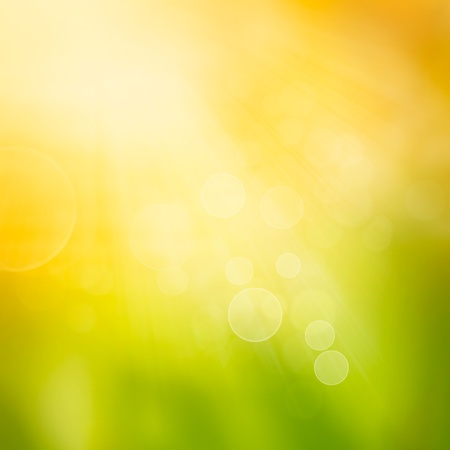 Autumn or summer abstract nature background with grass and bokeh lights.  photo