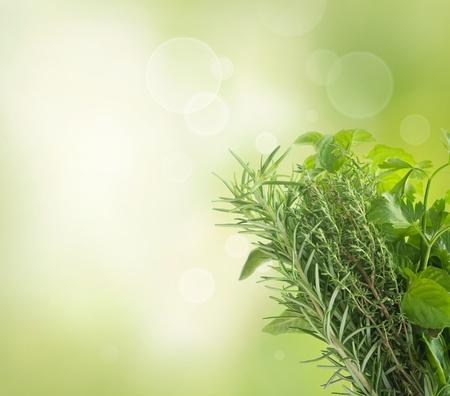 mortero: La variedad de hierbas frescas con copyspace aislados en blanco