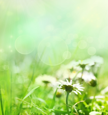 Spring nature background with daisies and sunshine Stock Photo - 11226243