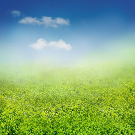Spring background Stock Photo - 11226347