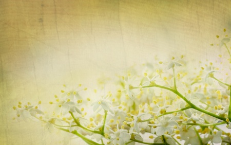 Flower background Stock Photo - 11226146