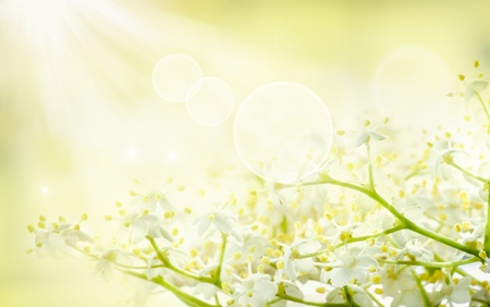 soft object: Flower background